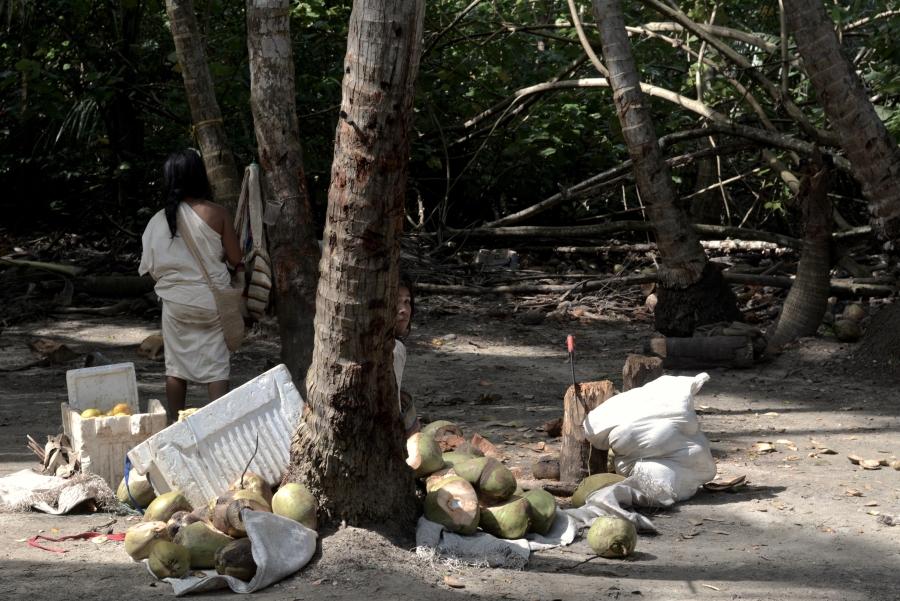 Indígenas tayrona, cocos turistas. Parque Natural Tayrona, Colombia.